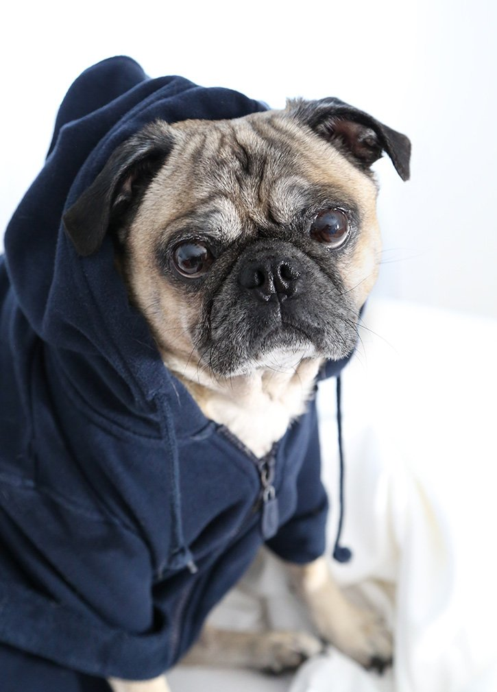 DIY Monogrammed Dog Hoodie