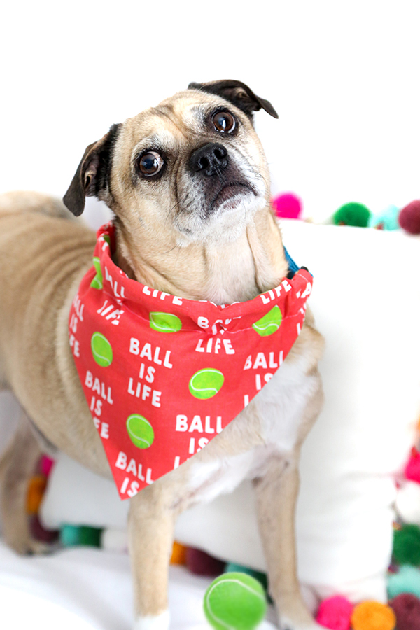 Easy Sew Dog Collar Bandana